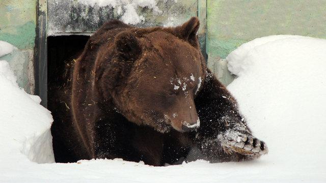 Медведь элеватор транспортер купить бу
